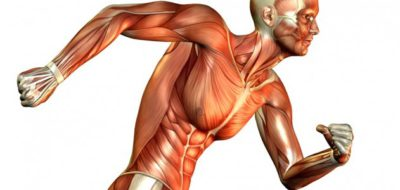muscle contraction rolfing